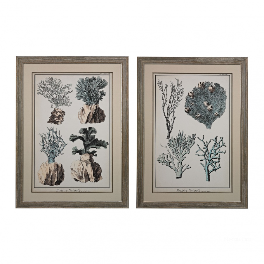 Картина Oversized Coral Species I, II - Fine Art Giclee Under Glass Dimond Home